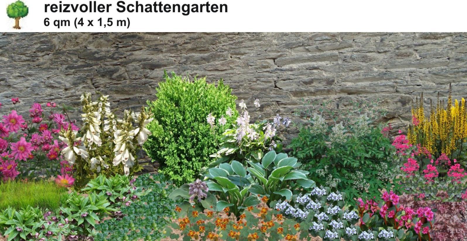 Staudenbeete Mit Bunten Pflanzen Fur Schattige Platze